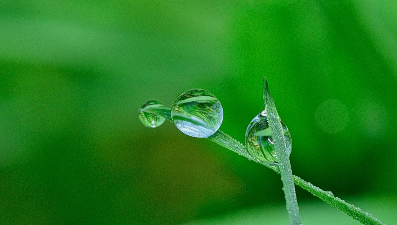 Regentropfen auf Grashalm