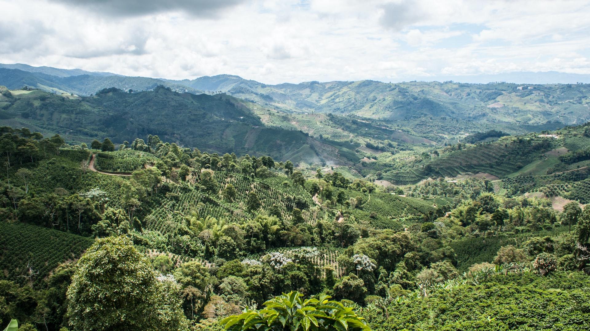 Anbaugebiet für Hochlandkaffee
